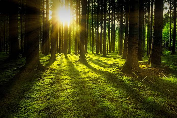 pulihkan hutan