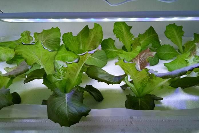 tanaman terpapar cahaya dekat dan konstan