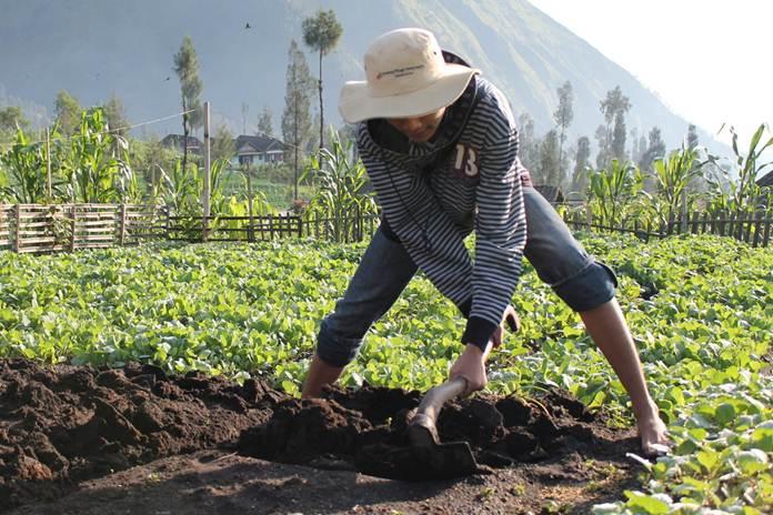 jenis alat pertanian tradisional