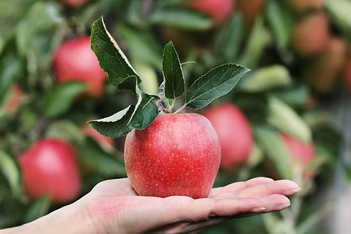 jenis buah dan sayur