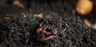jenis pupuk kompos