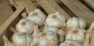 Keistimewaan bawang putih