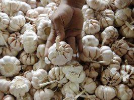 praktik beli kuota bawang putih