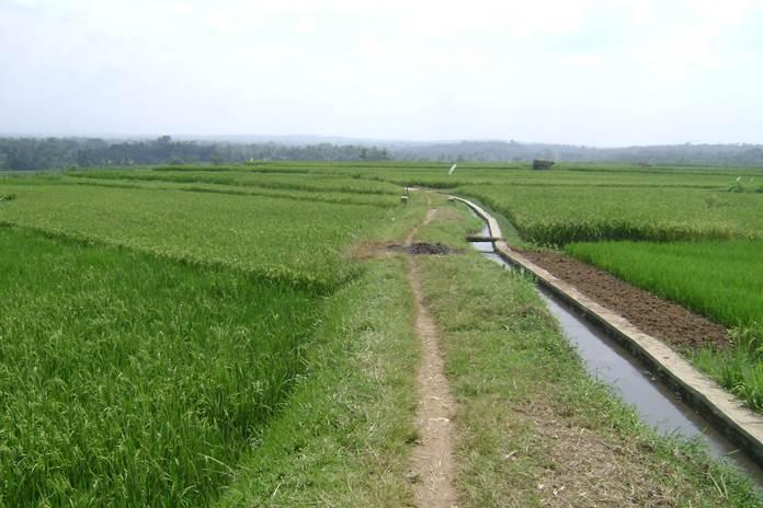 lahan pertanian organik