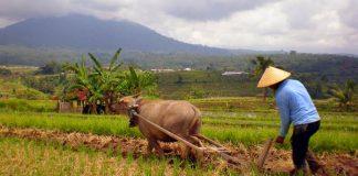 inovator sektor pertanian
