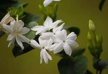 manfaat tanaman bunga