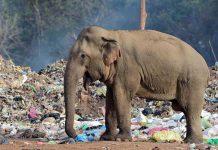 gajah Sri Lanka