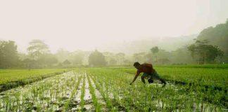indeks nilai tukar petani