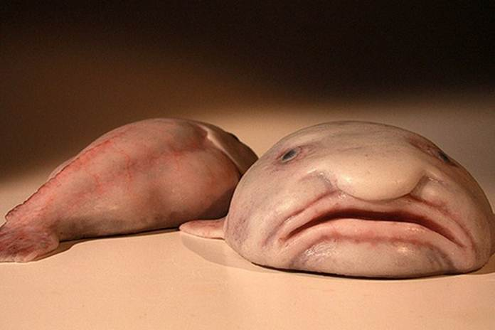 10 hewan aneh laut dalam Australia