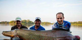 ikan air tawar paling besar di dunia