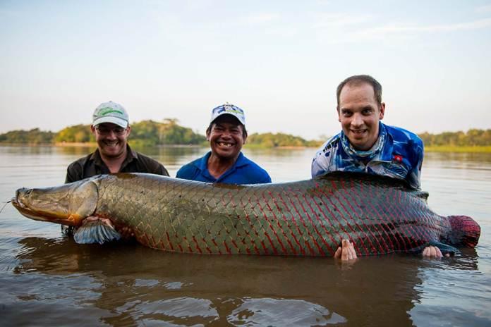 Unduh 900+ Gambar Ikan Besar Di Dunia HD Gratis