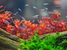 memandangi ikan di akuarium