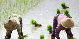 kesejahteraan petani Indonesia