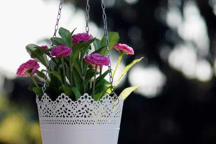 tips menata tanaman hias gantung