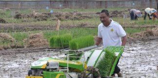 pola pertanian modern
