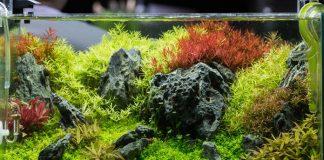 Cara membuat aquascape