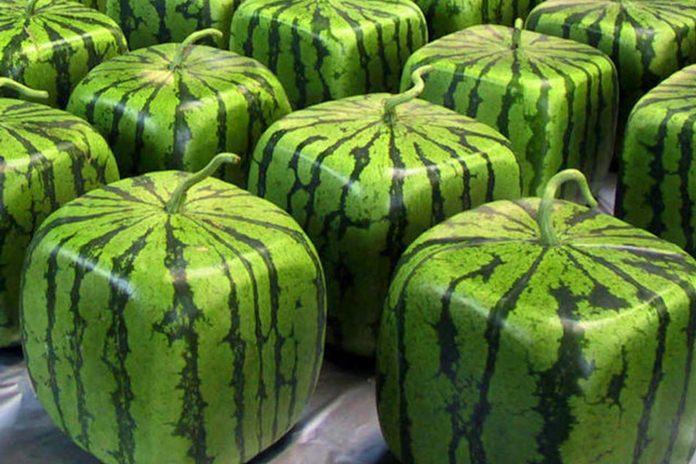 Pernahkah Anda membayangkan bagaimana jika di dunia ini tidak ada buah? Pasti sangat aneh. Ya, ada begitu banyak jenis buah yang ada di muka bumi, namun pernahkah Anda mengonsumsi buah paling mahal di dunia? Bagaimana bentuknya dan seperti apa rasanya?