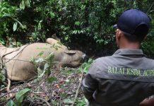pembunuh gajah Bunta