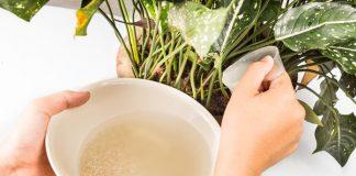 air cucian beras