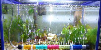 peran aerator akuarium