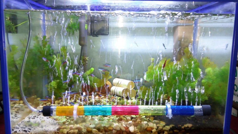 Peran Aerator Akuarium Untuk Ikan Hias Artikel Pertanian