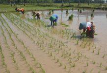 alat pertanian baru