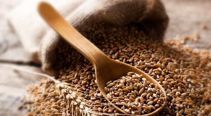 Jenis gandum terbaik