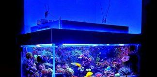 memilih akuarium