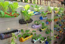 kreasi pot tanaman hias
