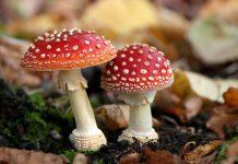jamur ajaib, unik, dan indah