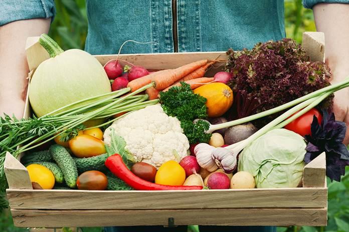 usaha dari sektor pertanian