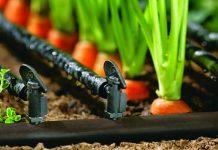 Bertanam wotel hidroponik