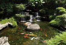 Membuat kolam ikan koi