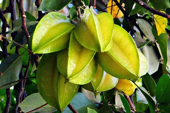 buah belimbing demak