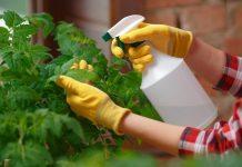 Penyemprotan pestisida