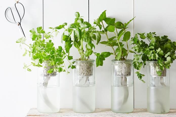 Simple herbs