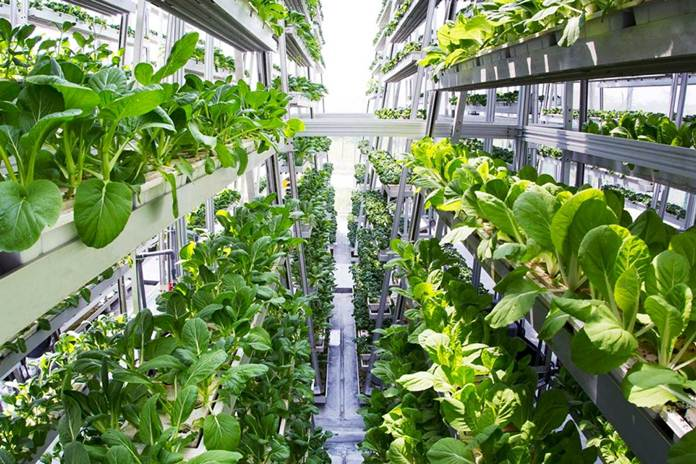 pertanian vertikal