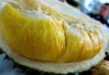 gendu durian