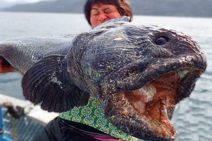 ikan mengerikan
