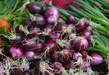 jenis bawang yang banyak dibudidayakan