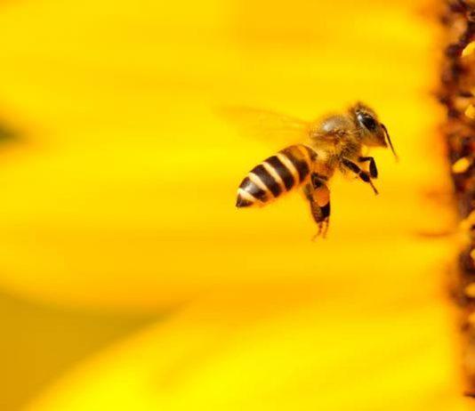 Lebah ternyata bisa stres