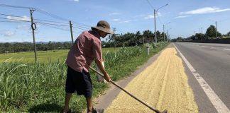 pemasalahan petani Indonesia