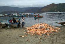Jutaan ikan mati mendadak