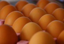 alat panen telur