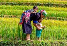 regenerasi petani