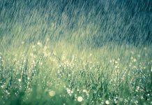 aroma air hujan