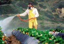 racun bahan kimia pertanian