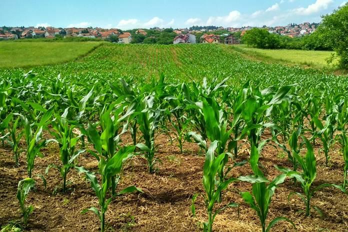 pertanian dalam negeri