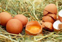 Kulit telur ayam