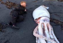 penyelam Selandia Baru